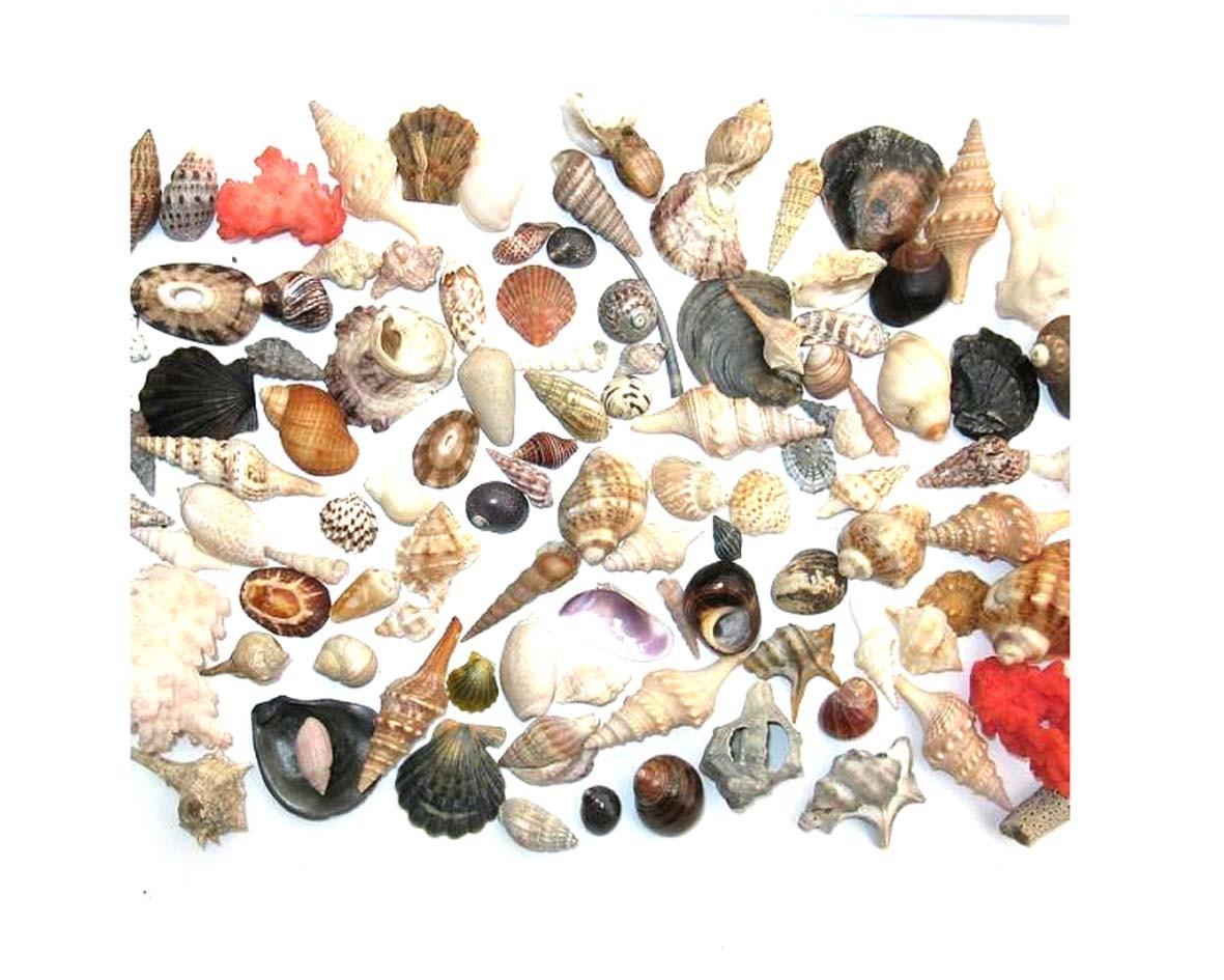Shell & Sea shell